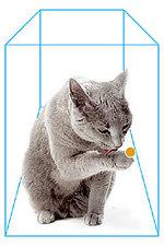 Cat_state