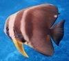 Fish_sm